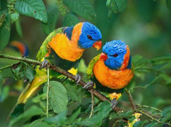 Birds For Sales in Pakistan